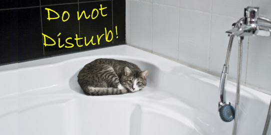 Do not take a shower for one day so you will save 80 liters of water and let your cat sleep in the bathtub.