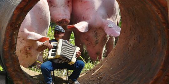 Pour réduire vos émissions de gaz à effet de serre et votre empreinte écologique, vous pouvez simplement réduire votre consommation de viande de porc.