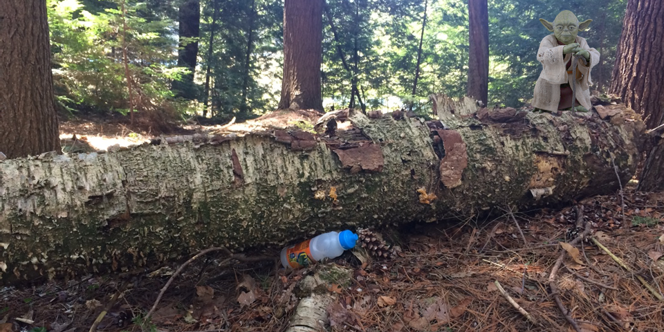 Disposable plastic bottles are harmful to the environment, yet we find it everywhere: beach, forest, river ... Their manufacture requires oil, emits CO2 and pollutes the water. Fortunately, we can easily live without it.