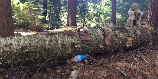 Les bouteilles en plastique jetables sont nuisibles pour l'environnement, pourtant on en retrouve partout : plage, forets, rivière… Leur fabrication nécessite du pétrole, émet du CO2 et pollue l'eau. Pourtant, nous pouvons facilement nous en passer.