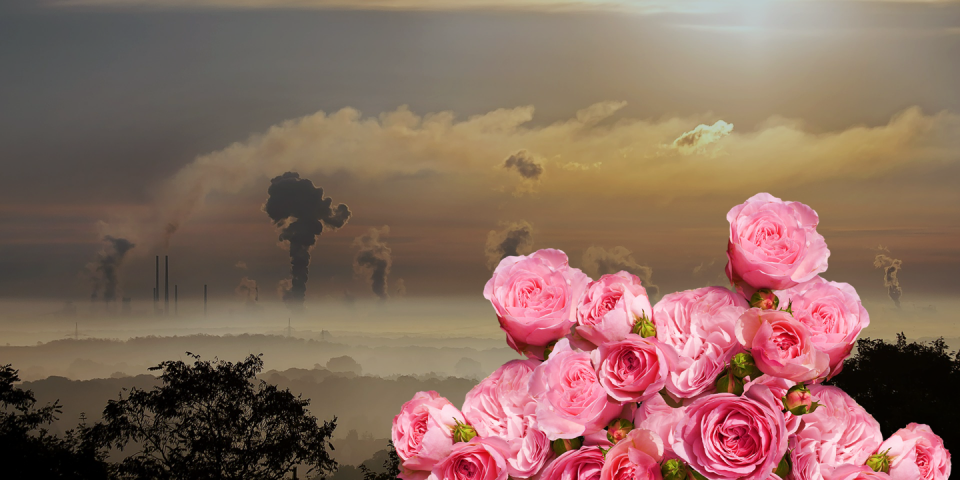So beautiful, but so toxic: roses are not a good gift for the future of your relationship.